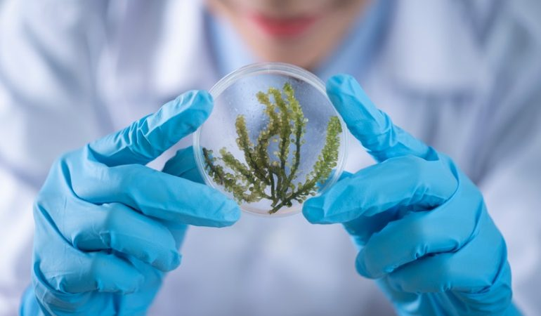 Biology – A Study of All Aspects and Forms of Living Beings